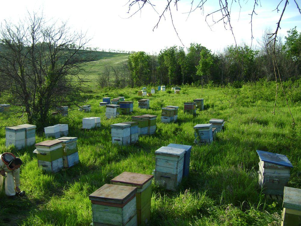 творог с медом польза для потенции